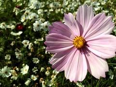 Flowers,Plants & Garden at 新社花海
