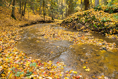 Fall In the Creek (PopsDigital) Tags: autumn trees red orange fallleaves color colour tree green fall water leaves yellow horizontal creek forest woodland landscape leaf woods woodlands colorful stream branch bright fallcolors branches autumnleaves autumncolors billpevlor popsdigital sonyslta77v