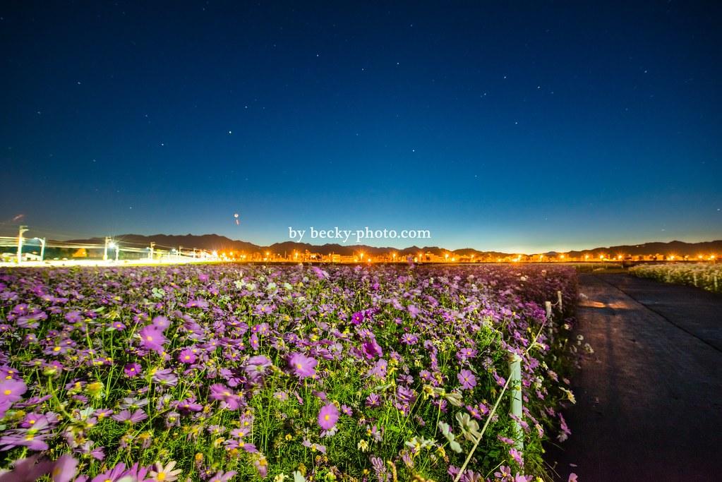 【台中】。心動台中~滿天星星和花海的融合 清晨的新社花海是一種寧靜