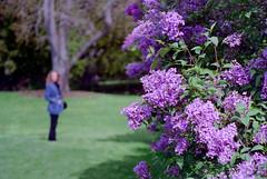 Eastman House- garden 2 (rhizomeblur) Tags: film kodak newyorkstate ektar olympuspenft 35mmhalfframe fzuiko38mmf18