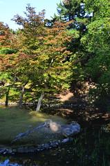 Garden Trees (pokoroto) Tags: autumn trees japan garden october  nara kansai 2014 10    naraprefecture  kannazuki   themonthwhentherearenogods 26