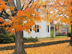 Oxford Autumn Scene (Universal Pops (David)--Badly Needs Bandwidth) Tags: pink autumn orange white house fall home leaves yellow stone wall architecture season gold background rich vivid northcarolina structure full sidewalk oxford trunk change t