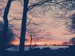 (sofjet) Tags: trees winter sunset sun snow cold tree ice nature forest skne frost sweden scandinavia iphone