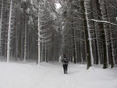 Hacia el Adi (jaecheve) Tags: españa snow forest spain nieve bosque invierno adi navarra urkiaga urquiaga