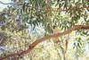 Kookaburra 3 (everyday sh⊙_☉ter) Tags: park beach forest sydney waterfalls kookaburra wattamolla garie royalnationalpark audley stanwell hackerriver