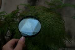 (Jlia F. Andrade) Tags: brazil verde green nature brasil canon lens eos natureza lente lupa campinas magnifier 30d