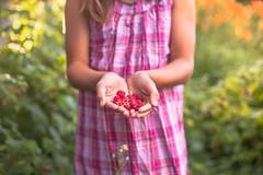 About me (Nathalie Le Bris) Tags: 7dwf mano hand main child enfant nio framboise frambuesa raspberry fruita fruit bokeh rose pink rosa