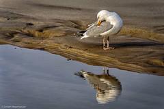 _DSC8822.jpg (J.Weyerhuser) Tags: mwe beach sylt reflection spiegelung wasser strand