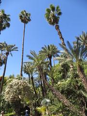 Marrakesh Majorelle_9814 (JespervdBerg) Tags: holiday spring 2016 africa northafrican tamazight amazigh arab arabic moroccanstyle moroccan morocco maroc marocain marokkaans marokko marrakech marrakesh majorelle