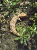 DSCF0214 (Stonehenge 68) Tags: zoo birmingham snake alabama lizard plantation antebellum birminghamzoo arlingtonhouse