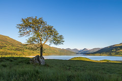 Loch Arklet (dalejckelly) Tags: mountain mountains tree grass sunrise canon landscape scotland loch trossachs
