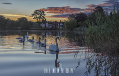 Sunrise over Beaulieu Pond in the New Forest, Hampshire ** explored ** (Emily_Endean_Photography) Tags: newforest hampshire foals sunrise dawn water pond beaulieu reflections nikon morning summer explore explored