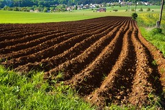 Plowed field (tomaskriz1) Tags: moravian spring soil season scene rural plowed plow ploughed plantation plant outdoor nature meadow landscape land growth green grass field farmland farming farm earth dirt cultivated countryside country brown background agriculture