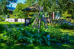 The Community Gardens and Colony Farm Regional Park ( Peteron Phtography) Tags: colonyfarmcommunitygardens colonyfarmregionalpark farm park regionalpark bcparks gardens gardeners gardenplots floralgarden flowergarden flowers communitygardens thecommunitygardens organicvegetables organic trails paths pathways plots vegetables portcoquitlam coquitlam britishcolumbia canada nikond5200 nikon vancouverphotowalkmeetupgroup vancouvermeetupgroup meetupgroup