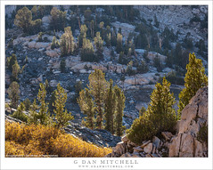 Morning Light on Trees (G Dan Mitchell) Tags: kings canyon national park seki sequoia sierra nevada mountain range trees morning light glance high elevation granite wilderness nature landscape