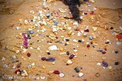 Covered Sand (tia-louisethompson) Tags: shells beach sea ocean coral water nature natural bright colourful