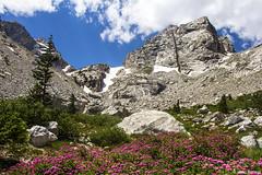 Lupine Meadows (isaac.borrego) Tags: uploadedviaflickrqcom mountains peaks lupinemeadow flowers grandteton nationalpark wyoming canonrebelt4i jacksonhole flower unitedstates america