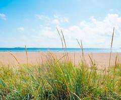 Hanko, Finland (miemo) Tags: balticsea beach clouds em5mkii europe finland grass hanko horizon landscape nature omd olympus olympus1240mmf28 sand sea shore sky summer