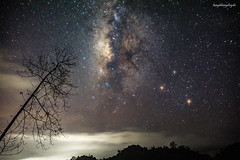 Look from another Star (langthangdaydo) Tags: milkyway milky way sky blue nightscape night nightphotography nightfall nightsky nighttime star stars backpacker travel traveling traveler explorer explore longexposure adventure trip bluenight dark darkness photo galaxy astrophotography vietnam asia relax outdoor green tree wilder wilderness astronomy photography wildlife wild willderness cloud cloudy hill rocks rockmountain mountain stones bluesky lights light road mountains highland colorfull fullstar color amazing wonderful beauty beautiful shadown forest trees lonely town dawn universal astrophoto universe astrography texture abstract
