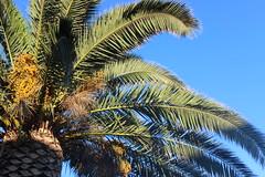 IMG_9240 (Moris.marcel) Tags: sardagena italy nature blue travel roadtrip sardinie