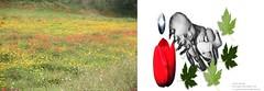Portafolio 52 Mon petit art bon marche Yles (mon petit art bon march) Tags: auto life bon naturaleza baby verde art blanco nature la rojo y negro cine luna holy retratos vida fields mon figueres detalles marche yolanda 52 cabecera vie petit portafolio valenzuela verdad directora tulipan amapola creativa producciones renacer artstica publicista comadreja yles