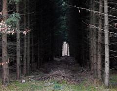 Tunnel (offroadsound) Tags: winter light forest dark hope sadness darkness hiver tunnel bosque invierno endurance wald spruce episode forêt dunkel fichten dunkelheit oscuro monoculture melancholia nadelwald monokultur
