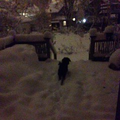 Winter Nighttime Backyard Grand Rapids (stevendepolo) Tags: winter backyard grand rapids nighttime