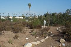 141018_7585_600px.jpg (Weeding Wild Suburbia) Tags: park gardens publicgardens spnp