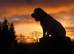 Another sunrise....same spaniel (cocopie) Tags: wood clouds sunrise cockerspaniel