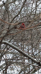 IMG_20150303_151005_773 (ShellyS) Tags: nyc newyorkcity trees winter snow birds centralpark manhattan parks