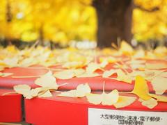 posted (torisandaisuki) Tags: fall japan ginkgo olympus 2014 200mm em10 keiouniversity 慶應義塾大学