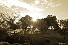 Sun through the trees (bettys_view) Tags: california morning light sky sun tree nature grass sunshine northerncalifornia sepia sunrise landscape outdoors nikon photographer natural outdoor side hill folsom nik sacramento lds jclds l817