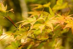 Mitaki-dera (f1crazed) Tags: japan hiroshima f1crazed mitakidera
