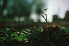 Spring is late  (baofengwuya) Tags: china plant 35mm canon photography eos spring flickr photographer chinese   2016 eosm2
