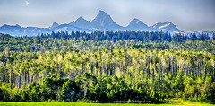 Teton view from Idaho (Pattys-photos) Tags: idaho tetons