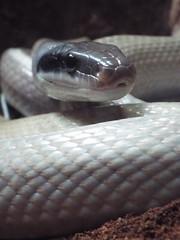 DSCF0148 (Stonehenge 68) Tags: zoo birmingham snake alabama lizard plantation antebellum birminghamzoo arlingtonhouse