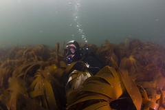 20160803-Eyemouth2 (Dacmirc) Tags: eyemouth diving ukdiving rebreather