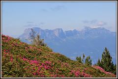 29-IMG_0010 (Yasmina Saoudi) Tags: montagne alpes rhone chamrousse belledonne