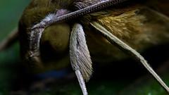 Moth close up (Andyfrog321) Tags: santa wild cloud america forest ecuador rainforest wildlife south reserve jungle lucia