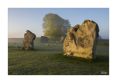 Morning at the Stones (JRTurnerPhotography) Tags: jaketurner jrturnerphotography canon canon5dmarkiii canon24105mmf4lis leefilters leegradfilters print picture image photo photograph photography photographer sunrise dawn sunlight mist fog sheep lambs farming farmland cattle farmanimals mammal animal avebury aveburystonecircle worldheritagesite stonecircle wiltshire southwest westcountry england uk unitedkingdom britain britishcountryside british gb greatbritain europe countryside nature spring tree