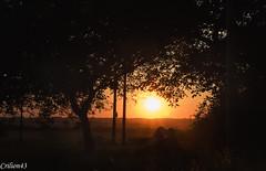 A travers les arbres. (Crilion43) Tags: arbres france vreaux paysage ciel coucherdesoleil centre nuages divers canon champ cher maison nature pr rflex sapin thuya