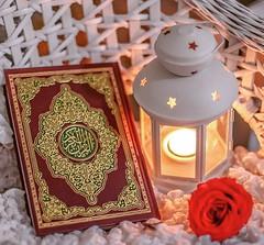 Ya Allah, Grant Us Success, Ameen~!!  #Allah #Quran #Pak #AlQuran #HolyQuran #Islam #Jummahmubarak #Friday #Grant #Us #Success #Ameen #Photography #Shot #Motivation #Light #Flower #Redrose #Instacool #Instadaily #Closeup #Focus #Dua #Likeforlike #Likesfor (Gillaniez) Tags: life motivation friday love closeup holyquran jummahmubarak islam dua quran light grant focus alquran us shot success photography pak likesforlikes instadaily likeforlike flower ameen instacool redrose allah
