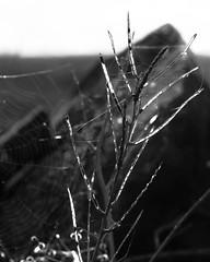Seed Pods (warth man) Tags: d750 nikon135mmf2dc seedpods seeds mono