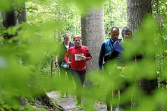 Hallwilerseelauf: Laufen im Gruenen