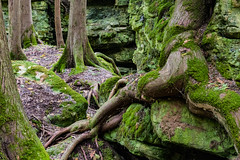 Walt's Woods Trees 292 of 365 (3) (bleedenm) Tags: outdoors landscape 2016 fall october karst topography doorcounty baileysharbor wisconsin