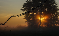 Misty Morning (H - D - O) Tags: misty morning sunrise low light nature sunbeam spiderweb nebel morgenlicht sonnenaufgang natur sonnenstrahlen spinnennetz