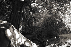 Domaniale (Atreides59) Tags: fort foret arbre tree nature arbres trees black white blackandwhite bw noir et blanc noiretblanc pentax k30 k 30 pentaxart atreides atreides59 cedriclafrance