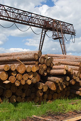 stack from larchs Siberian (Illingworth Ingham Manchester) Tags: lumbering woodworking wood round timber larch siberian grass green trunk stem bole rind bark cut butt marks stack day solar crane frame portal bridge metal sky blue cloud