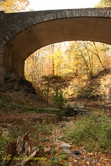 IMG_9009 (Sally Knox Sakshaug) Tags: letchworth state park new york autumn fall bright sunshine grandcanyonoftheeast portagecanyon october outdoors nature scenic pretty beautiful calm peaceful serene leaf leaves orange yellow red brown tree trees bush forest woods wood bark log trunk rock rocks grey gray shale wooded scene bridge stone arch archway partial artsy below angle upward sky underneath