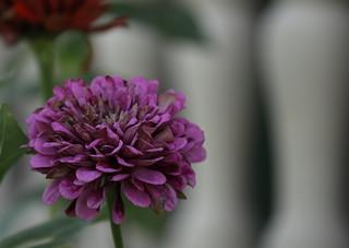 Flowers, Kline Creek Farm. 7 (EOS)